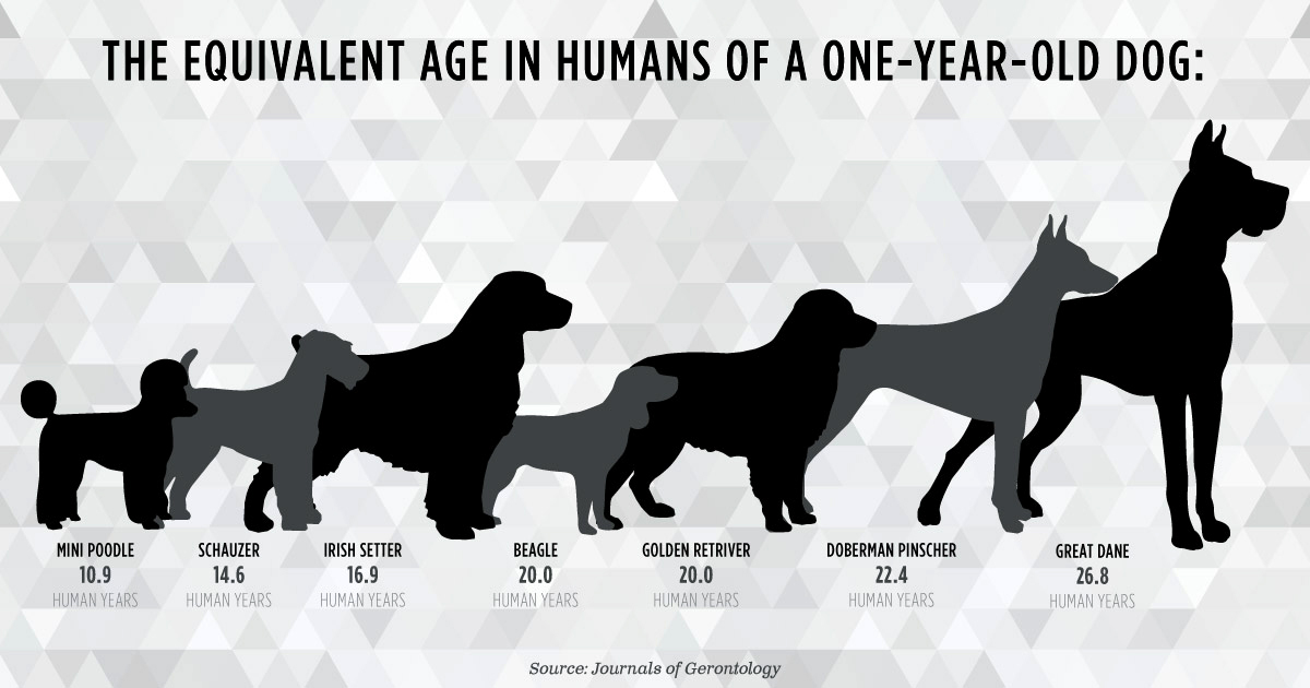 Flaws In The 7 Year Rule How Accurate Are Dog Years