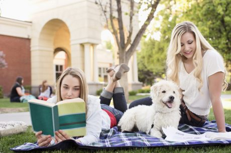 Therapy Dogs Reduce Anxiety And Loneliness For College Students