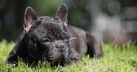 Relief for dogs with arthritis?