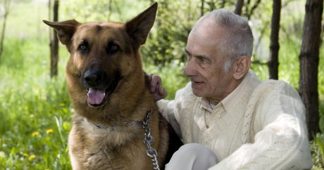 Anti-aging drugs for dogs and humans?