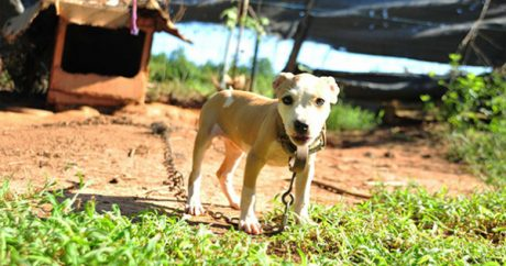 Sentences handed down from 2nd largest U.S. dog-fighting raid