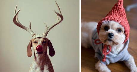 10 Ridiculous Ways To Dress Up Your Dog For The Holidays