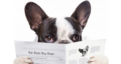 DogTime's top 10 dog news stories in 2014