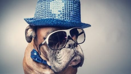January 14th Is National Dress Up Your Pet Day