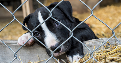 More states crack down on selling puppies - Dogtime