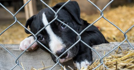 More states crack down on selling puppies