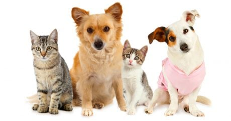Top 10 most popular dog and cat names of 2014