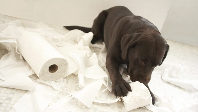 dog tearing up toilet paper
