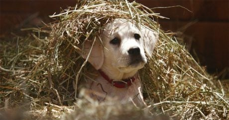 "Budweiser's ""Lost Dog"" Super Bowl commercial ranks number one"