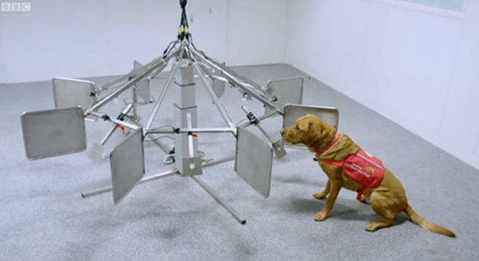 Cancer detecting dogs get lots of training. (Photo Credit: BBC Video)