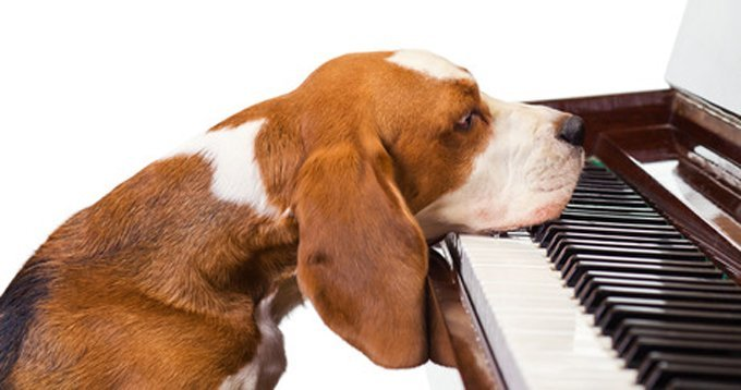 Music to soothe the savage beast. (Photo Credit: Shutterstock)