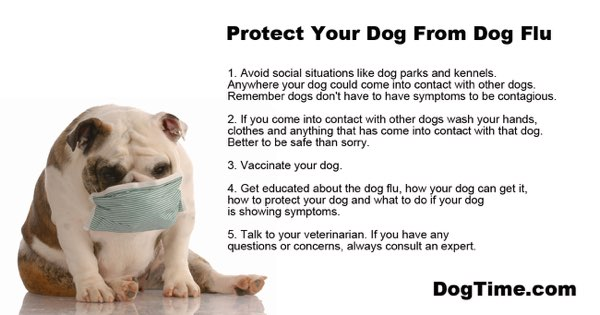 Can Train A Dog To Protect