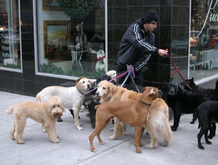 5 Biggest Challenges Of Being A Dog Walker