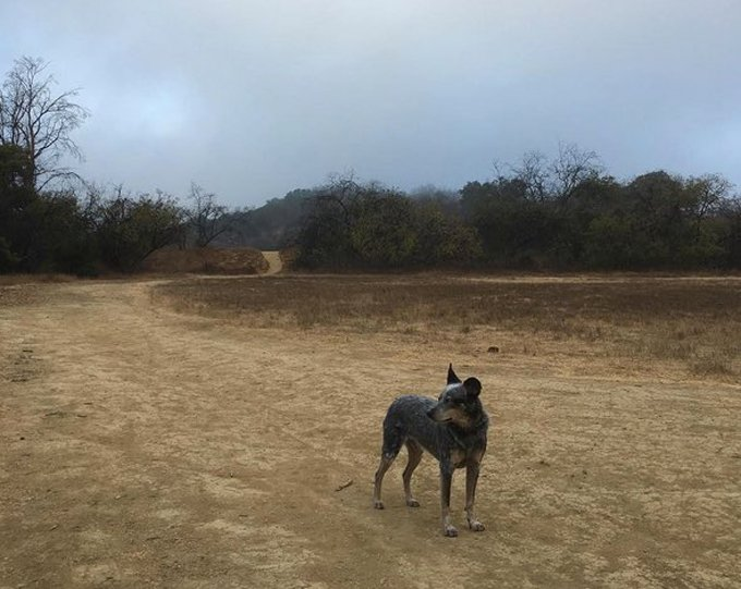 hiking-dogs-los-angeles-1
