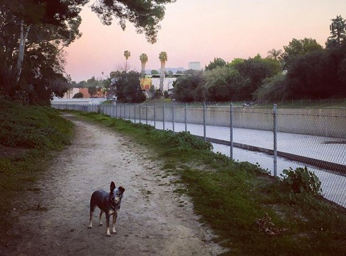 los-angeles-hiking-dogs-la-river