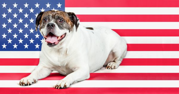 file_10959_what-are-some-famous-war-dogs