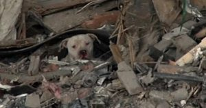 Thor: Dog Rescued From Trash Cave [VIDEO]