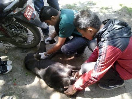 How You Can Help The Animals Affected By The Massive Earthquake In Nepal