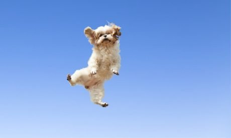 22 Dogs Jumping For Joy!