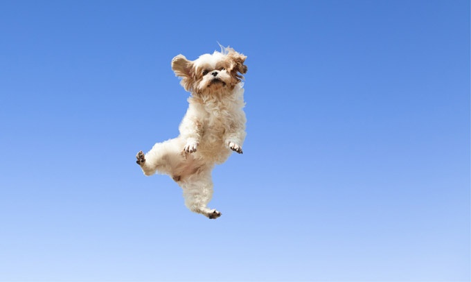 Image result for dogs jumping