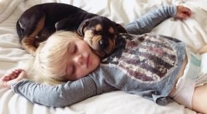 Cute Dogs Cuddling And Playing With Babies