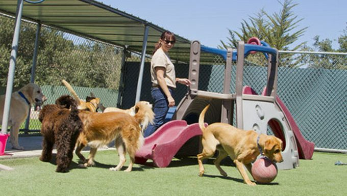 dog sitter with pups at playground
