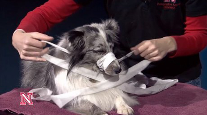 6a3d1189b How To Make A Dog Muzzle Out Of Gauze Or Fabric - Dogtime