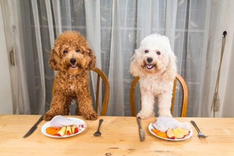 5 Tips For Rotating Your Dog's Protein Source