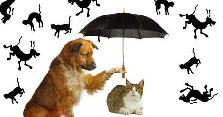 How Did Raining Cats And Dogs Come About