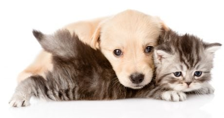Anti-Vaccine Fears Spreading To Parents Of Pets