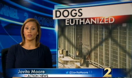 Outrage Over 64 Dogs Euthanized In Georgia Shelter