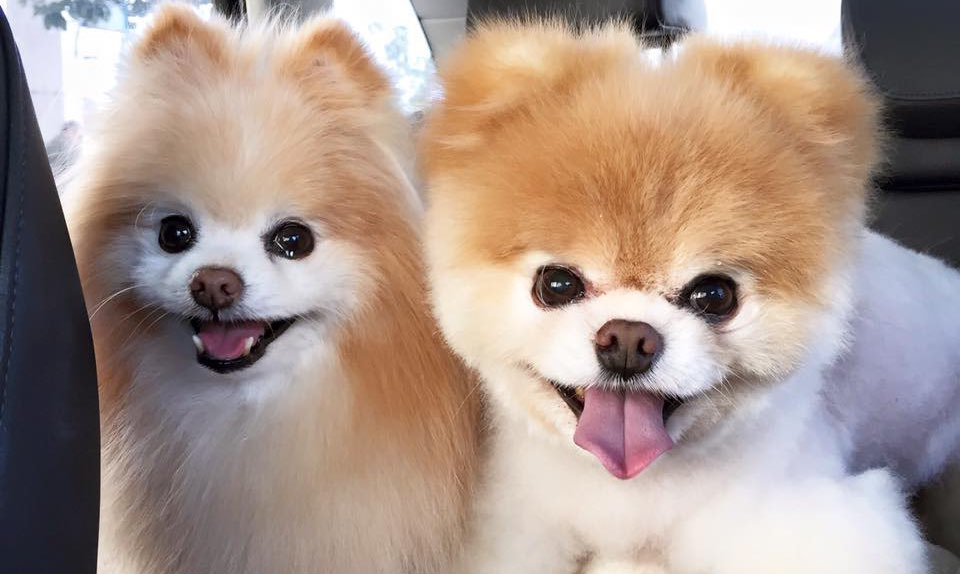 smile power day  dogs whose smiles will make you smile