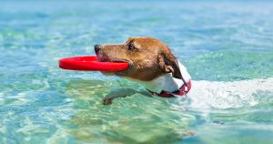 Summer safety for your pet