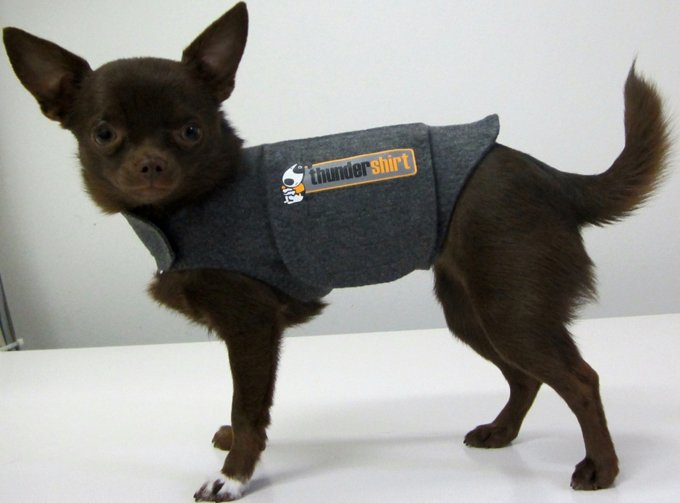 Thundershirt the best solution for noise anxiety dogtime for Medical pet shirt dog