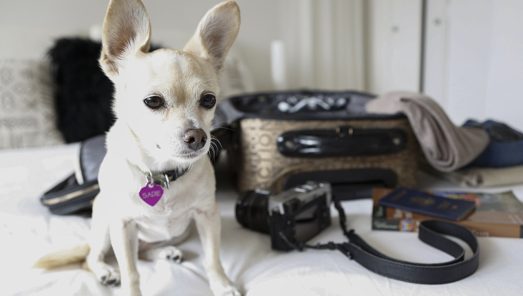 Dog sitting on bed near suitcase