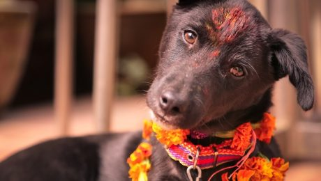 Nepal Celebrates Dogs During Diwali Festival