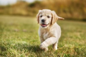 Starting Puppy Off On The Right Paw: Picking The Best Food