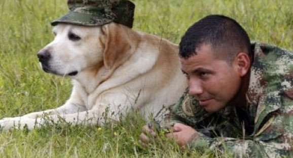 How Many Service Dogs In The World