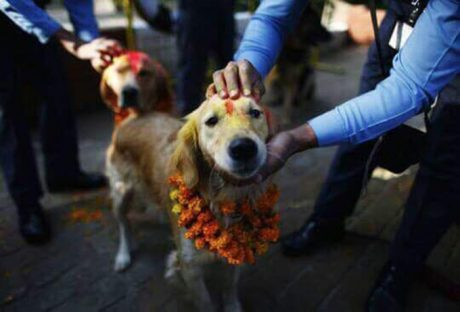 Nepal Celebrates Dogs With Diwali