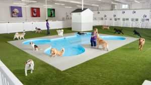 JFK The Most Pet Friendly Airport In America?