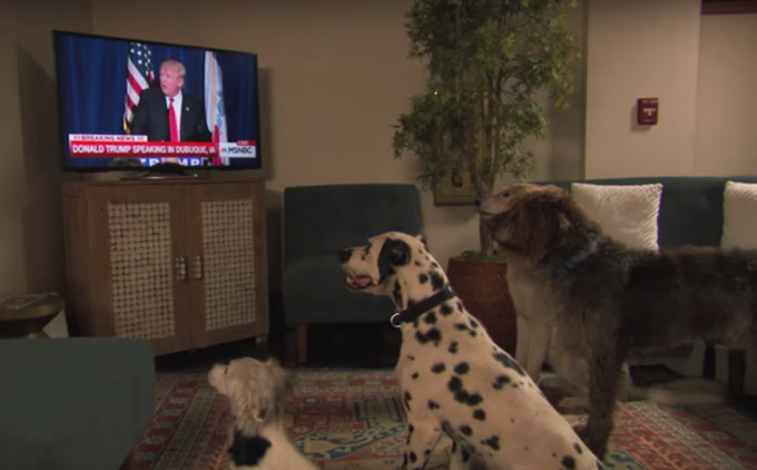 donald-trump-national-dog-day