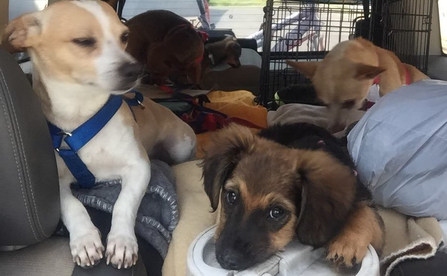 Homeless Man in California Travels to Indianapolis With 10 Dogs