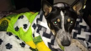 WIL Makes Blankets For Homeless Dogs And Cats, And You Can, Too!