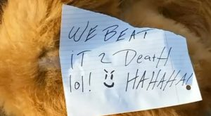 Someone Beat This Dog To Death And Left A Cruel Note Bragging About It