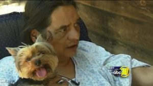 Yorkie Helps Man Fight Off Bear Attack