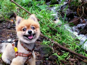 10 Secrets To Having A Happy Dog