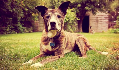 Champ Fund: Help us cure canine cancer