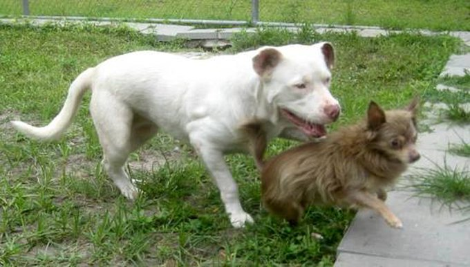 stray-dog-carries-friend-in-mouth