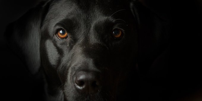 black-dog-day-october-1-7