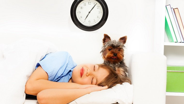 A small dog waits next to a sleeping human with a clock on the wall in the background.